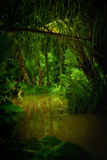 Jungle. Color  view of nice color misty  tropical jungle Stock Photos