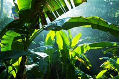 Jungle. Green jungle on Sri Lanka Royalty Free Stock Image