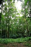 Jungle. A tropical climate forest stock image