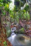 Jungle. Valee-de-Mai rain forest park on Praslin island, Seychelles. HDR image stock images