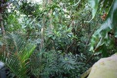 jungle Photos stock