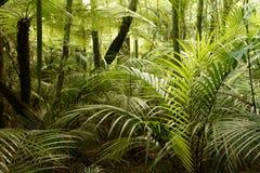 Free Jungle Stock Photos - 45329083