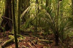 jungle Images libres de droits