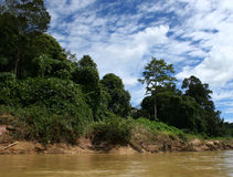 Jungle. Along a riverbank in southeast asia Stock Image