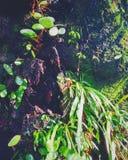 jungle Photographie stock
