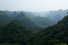 Jungle. At Cat Ba Island, Vietnam Stock Image
