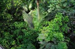 Jungle photo libre de droits