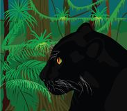 Jungle. The black panther in the tropical jungle Royalty Free Stock Photography
