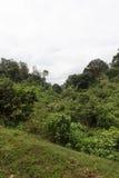 Jungle in Aberdare. Kenya. Africa Stock Image