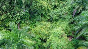 Jungle aerial. Amazing green tropical jungle on the pico isabel del torres mointain Royalty Free Stock Photos