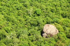 Jungle aerial view Royalty Free Stock Photography