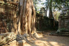 The jungle in Angkor Wat in Cambodia Royalty Free Stock Photos