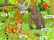 Jungle animals cartoon vector illustration Royalty Free Stock Images
