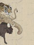 Jungle animals. Creative design of jungle animals stock illustration