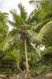 Jungle in Anse Lazio beach Stock Photo