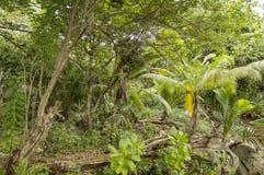 Jungle in Anse Lazio beach. Palms and tropical vegetation in Anse Lazio beach, at Praslin island, Seychelles Stock Images