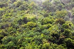 Jungle après pluie Image libre de droits