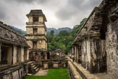 Jungle Architecture. Ancient Structures in the middle of the jungle, Palenque mexico Stock Image