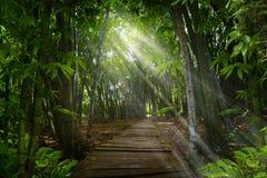 Jungle asiatique du sud-est photo stock