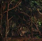 Jungle au Gabon photographie stock