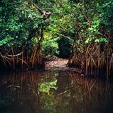 Jungle au Gabon photographie stock libre de droits