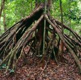 Jungle au Gabon photo libre de droits