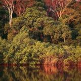 Jungle au Gabon image libre de droits