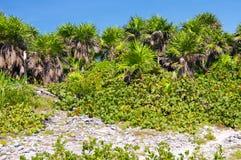 jungle au Mexique Photos libres de droits