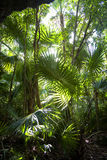 Jungle background Royalty Free Stock Image