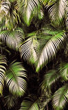 Jungle background Stock Images