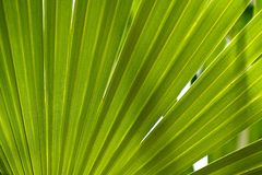Jungle Background Royalty Free Stock Photos