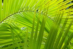 Jungle background Stock Photos