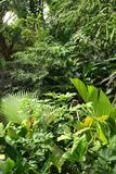 Jungle background. Very nice jungle background from the botanical garden Stock Photos