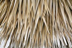 Jungle background of dead palm fronds overlapping layer of brown dry leaves.  royalty free stock images