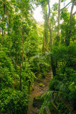 Jungle in Bali Royalty Free Stock Image