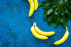 In the jungle. Bananas near big tropical leaves on blue background top view copyspace Royalty Free Stock Photography