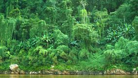 Jungle on the banks of the Mekong river. Laos Stock Photography