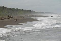 Jungle beach Costa Rica Stock Photos