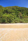 Jungle beach Royalty Free Stock Images