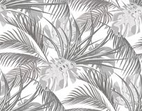 Jungle. Black and white background with leaves of tropical palm trees, monsters, agave. Seamless. Isolated on white. Vector illustration royalty free illustration