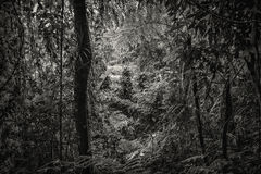Jungle in black and white Royalty Free Stock Photo