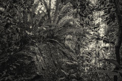 Jungle in black and white Stock Photography