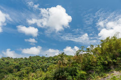 Jungle and Blue Sky in Barbados. Palm, Coconut, Banana tree and forest. Royalty Free Stock Images
