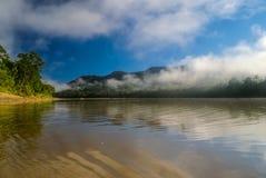 Jungle bolivienne Photos libres de droits