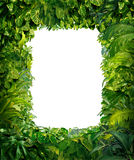 Jungle Border Stock Photos