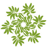 Jungle border frame with tropical green leaves . Greeting card on white background. Cover Royalty Free Stock Photography