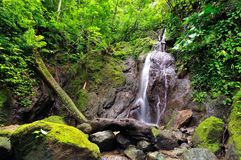 Jungle in the borderland of Colombia and Panama stock image