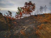 Jungle brûlée et érosion du sol ensuite d'une saison sèche de mousson image stock