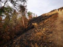 Jungle brûlée et érosion du sol ensuite d'une saison sèche de mousson photos libres de droits