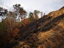 Jungle brûlée et érosion du sol ensuite d'une saison sèche de mousson photographie stock libre de droits